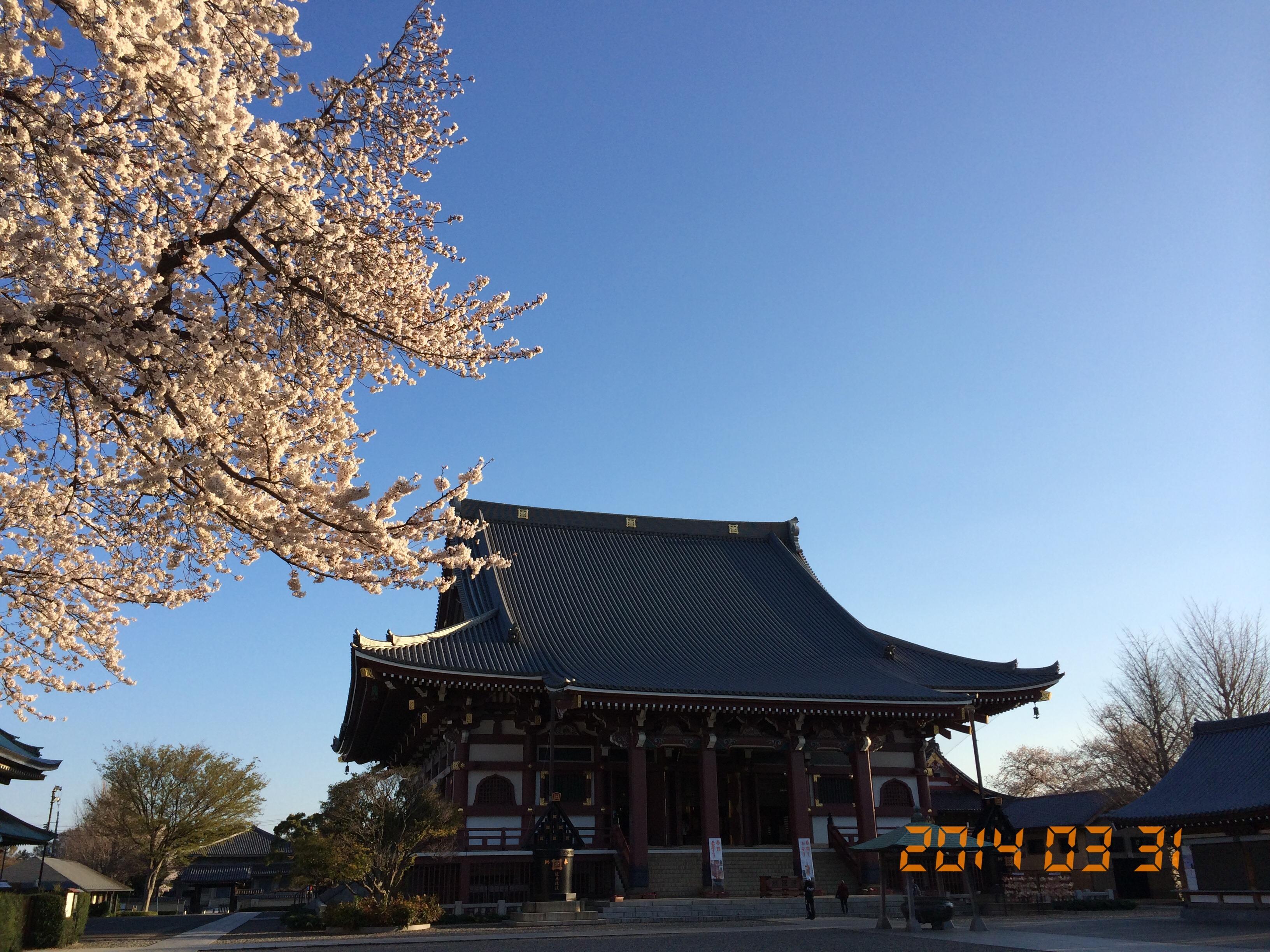 2014年3月31日池上本門寺